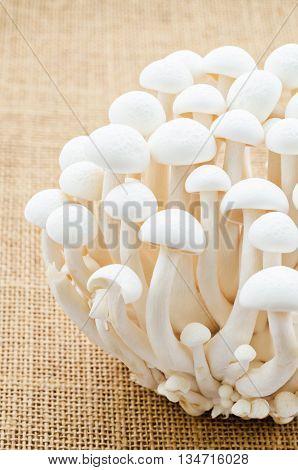 Close up Bunch of white bunapi beech mushroom on sack background.