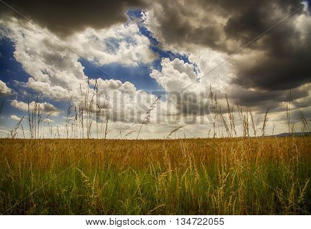 Fields Under Cloudy Sky