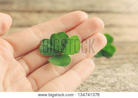 Hand holding clover leaf, closeup