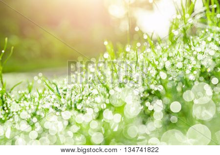 grass and water drops with nature bokeh.