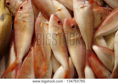 fresh seabream marine fish in market background