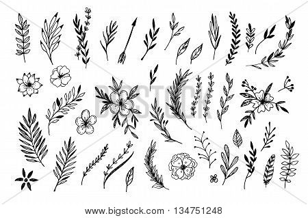 Hand sketched vector vintage elements ( laurels frames leaves flowers swirls and feathers). Wild and free. Perfect for invitations greeting cards quotes blogs Wedding Frames posters and more.