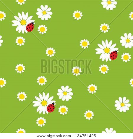 Chamomile Flowers With A  Ladybirds On Green Background