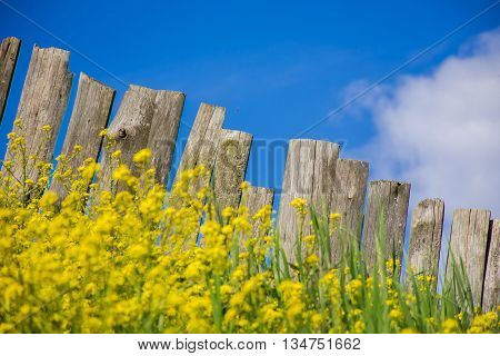 Pastoral views of the flower palisade. Palisade fence is a village full of flowers. Rural life outside the city. Landscape on bright flowers and a wooden fence on a ranch. Pasture for livestock.
