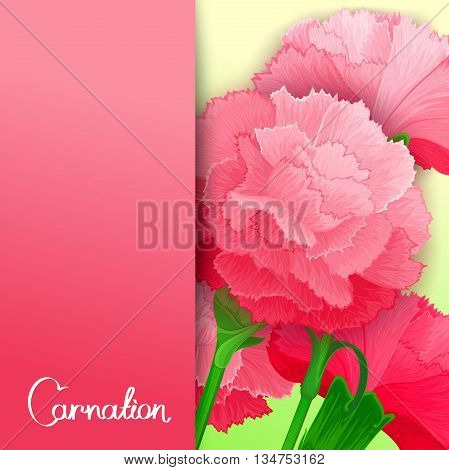 Bright vector banner with background of carnation flowers. Ready design for poster web print greeting card and advertisement.