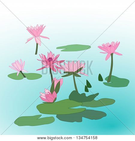 pink lotus flowers with leafs on water, vector illustration