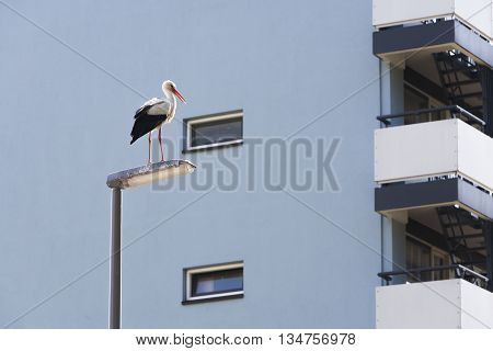 Stork on a lamppost in the city of Rotterdam in the Netherlands