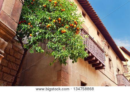 orange tree in Old town Spain Barcelona