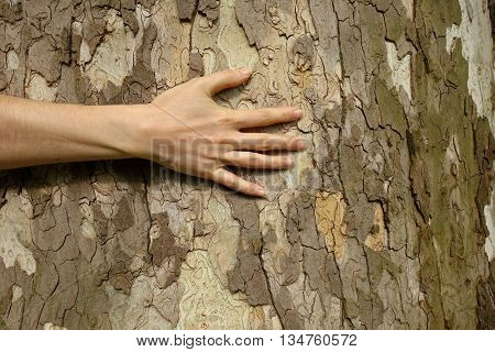 female hand embraces the large tree trunk