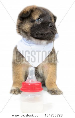 Cute baby of the dogs black and brown sitting beside bottles of milk unhappy on isolated white background