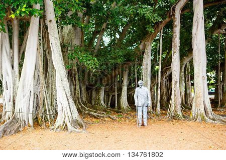 FORT MYERS, FL-APRIL  15 2016: Fort Myers Florida, Thomas Edison statue near big banyan tree outside of his summer home and laboratory in Fort Myers, USA.