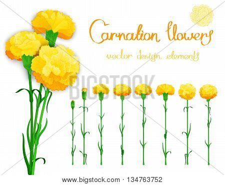 Vector set isolated of flowers carnations. Bundle of eight unique blossom with the stems and leaves. In addition a bouquet of three cloves with shadows.
