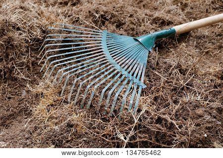 yard work preparation soil in garden with rake shoveling dry grass