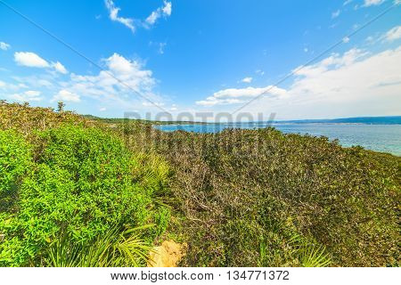 green vegetation by the sea in Sardinia italy