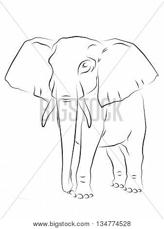 Outline drawing of an African elephant on a white background