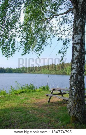 Idyllic lake view with a bench under a birch tree by lakeside