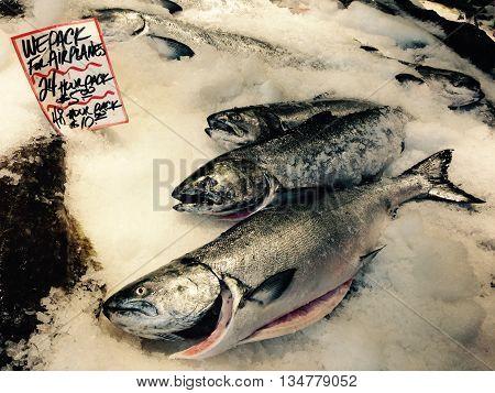 Salmon on ice at a fish market.