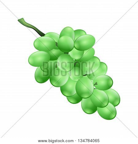 Bunche Of Grapes. Vector