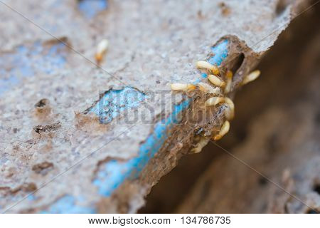 Book And Scrap Paper With Termites Damage,termites Bite Paper,anthill With Young Termites
