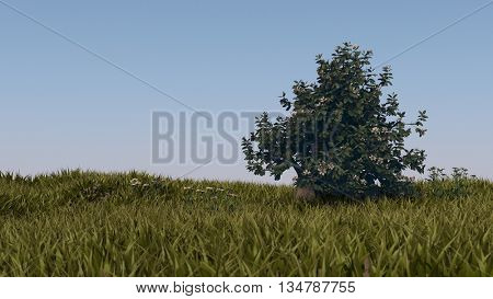 3d illustration of blooming magnolia tree in grass field