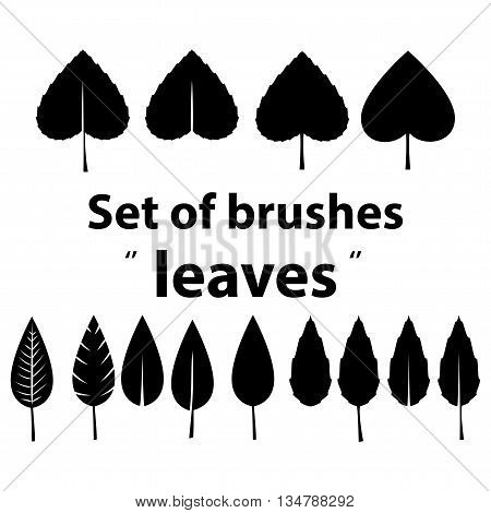vector set of brushes leaves of different styles