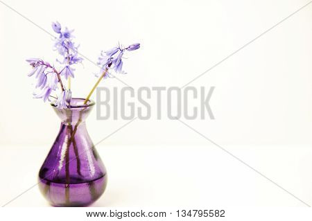 Styled stock floral image bluebells in a purple glass vase. Copy space for your business promotion instagram message or headline.
