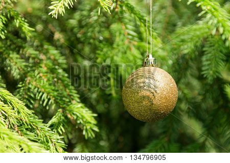 Golden Christmas tree ball on the green Christmas tree branches