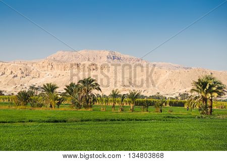 Oasis in the Valley of the Kings, Egypt.