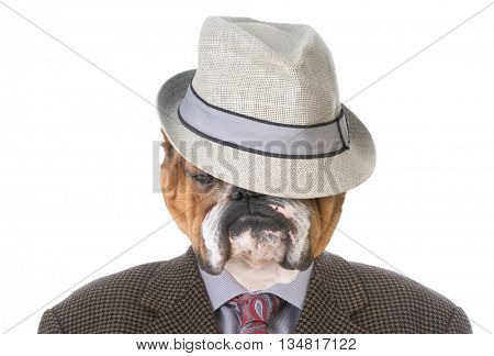 english bulldog wearing a mans suit and fedora
