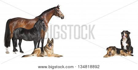 Horses Dogs White Background Collage