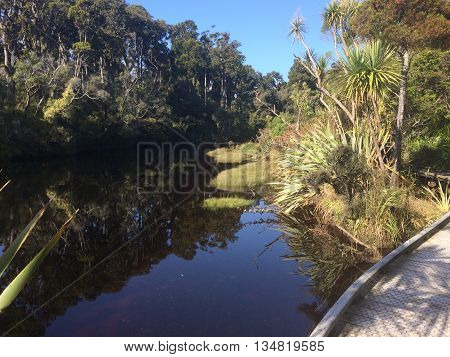 Ancient swamp forest path in New Zealand West Coast