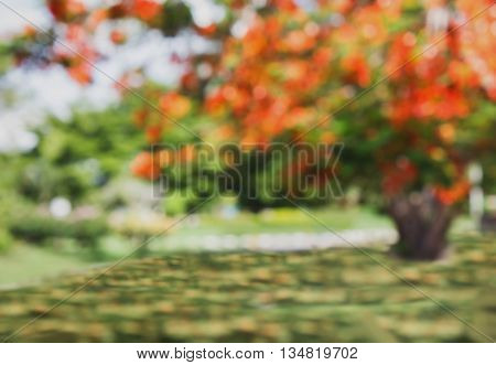 Blurred Background Or De-focused Of Orange Colour Flowers Blossom On Big Tree In Green Pupblic Outdo