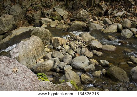 Forest stream among stones, cold and clean water stream in mountains, stream current between rocks