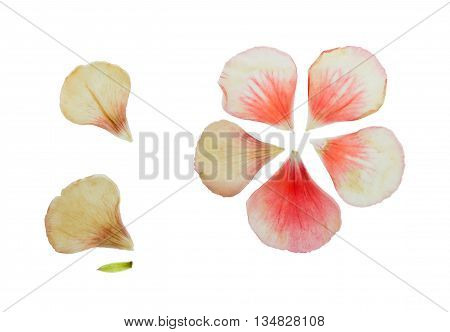 Pressed and dried delicate pink petals of geranium (pelargonium). Isolated on white background. For use in scrapbooking pressed floristry (oshibana) or herbarium.