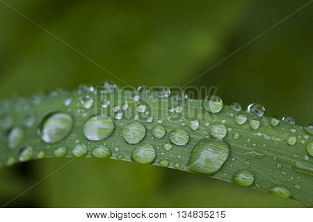 water drops covering a straw of grass