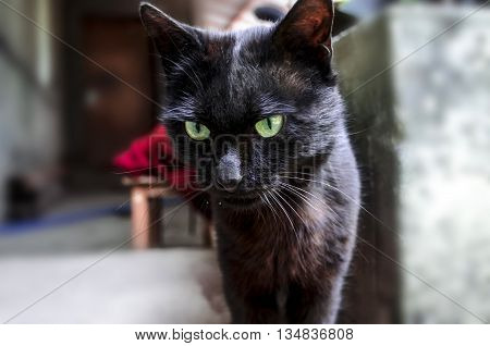 Young black cat with green expressive eyes in courtyard