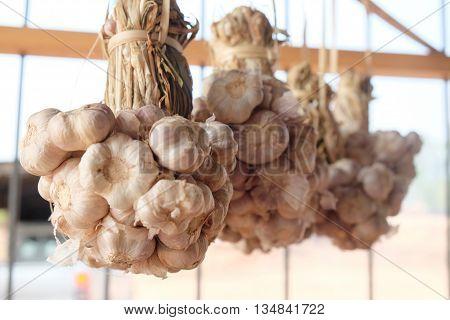 Close-up Thai garlic bulbs for Thai cook
