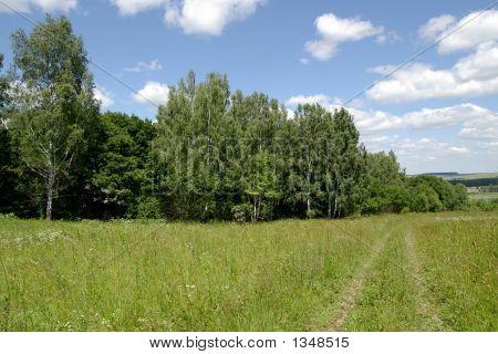 Road Along A Wood