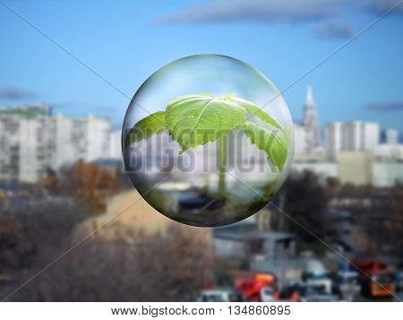 A transparent sphere with a young plant flying over the city. The concept of ecology urban greening environmental protection