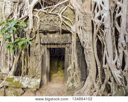 Temple detail at Angkor Thom overgrown with roots