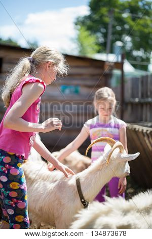 Two little girl with goat on the farm