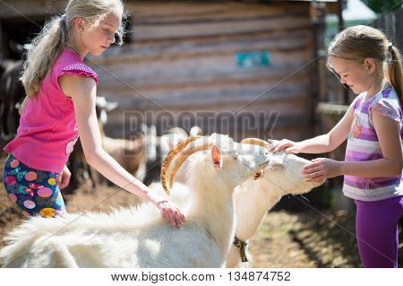 two sisters children playing with a goat at farm