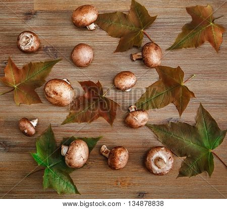 Background from Green Leaves,Fresh Champignons on the Wooden Table.Autumn Texture.Top View