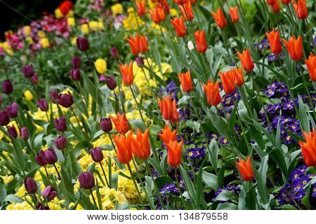 Abstract Creative Colourfull Garden Flower Scene  London England