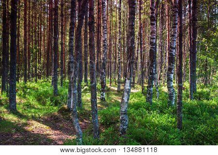 High Dynamic Range Birch Forest On The Lake. Picturesque Location For Hunting, Fishing And Camping.