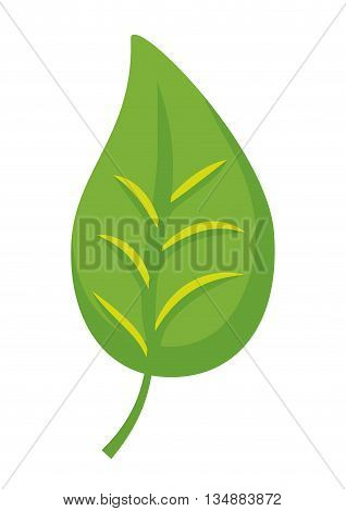Eco and green concept represented by leaf plant icon over flat and isolated background