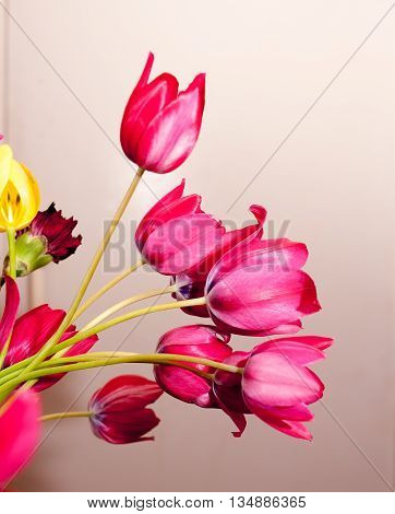 Spring bouquet of several pink tulips on a light backgroundbouquet of several pink tulips on a light background