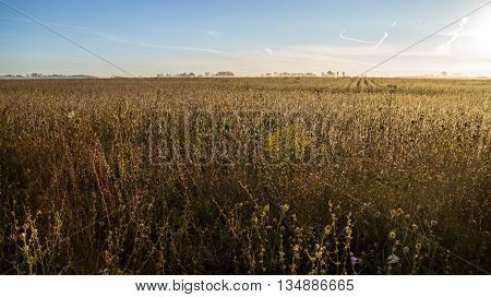 Wheat Field Horizon. Golden yellow wheat field with horizon over land.