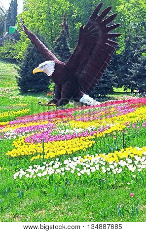 Statue of bald eagle and field of tulips in Kyiv, Ukraine