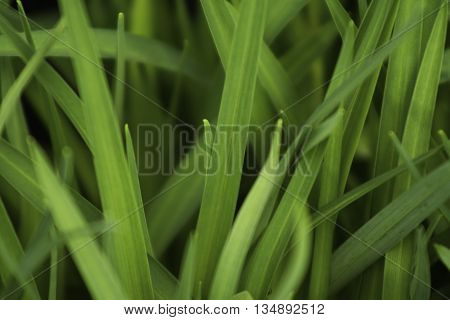Upclose photo of green blades of grass
